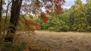 Arcadia Wildlife Sanctuary with Fall Colors